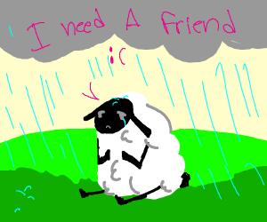 Sheep needs friends