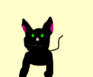 happy cat.. but it has a human nose