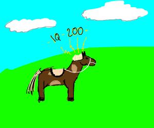 Brainy Horse