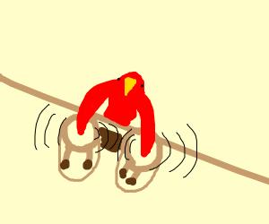 Weird Bird Playing the Bongos