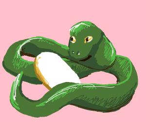 Snake caring for baby egg