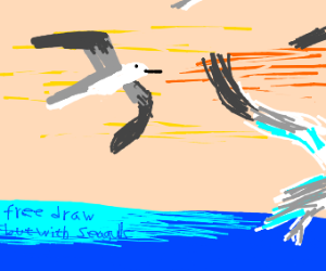 free draw but with seagulls