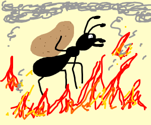 ant carrying a potatoe over fire