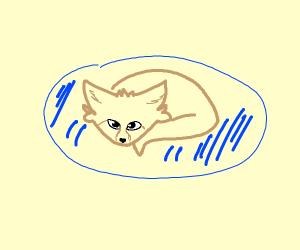 fennec fox in a blue dog bed