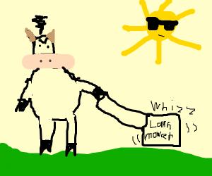 Bull doing yard work in the hot sun