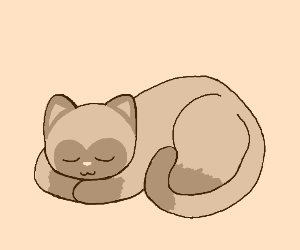 A sleeping Cat.