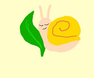 snail cuddling leaf
