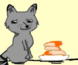 Raccoon eating Pancakes