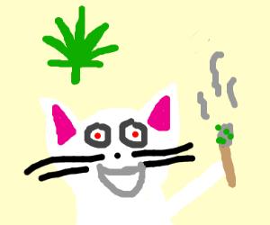 high kitty