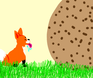 Fox looks at abnormally large cookie