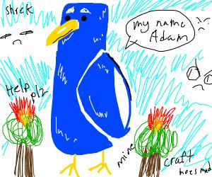 bird Adam