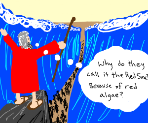 Moses Parts The Red Sea (not actually red)