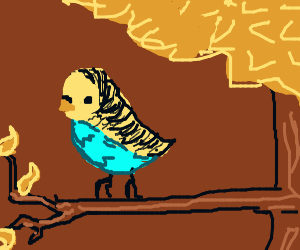 budgie perched on a tree