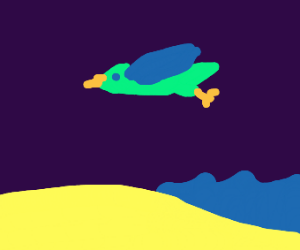 Bird flying over a beach.