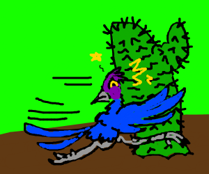 Roadrunner collides with cactus