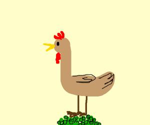 Turkey on peas