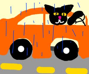 cat driving in the rain