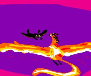 Hawk attacks Phoenix