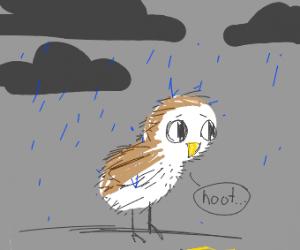 a cute owl in a rainstorm