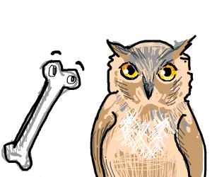 Bone looking at an owl
