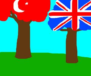 turkish tree next to british tree