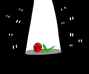 Just a small rose..