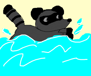 aquatic racoon swims in the atlantic