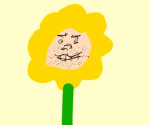 creepy ass face on sunflower