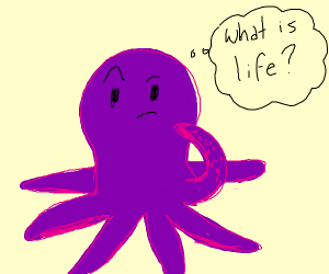 Octopus wonders about the meaning of life.