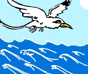 Posh bird flies over ocean