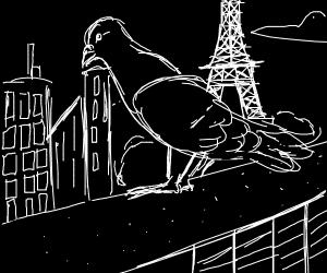 a pigeon in paris
