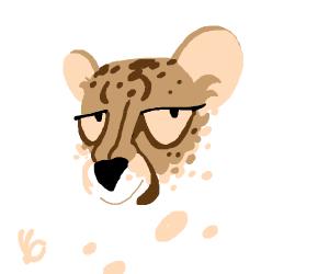 Excellent cheetah