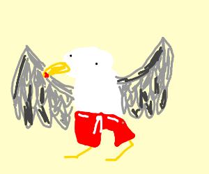 seagull in shorts