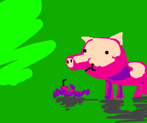 A pig eating grapes