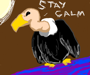 vulture saying 'stay calm'