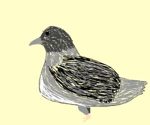 pigeon (medium chonky)