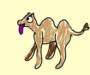Big eyed camel with purple tongue