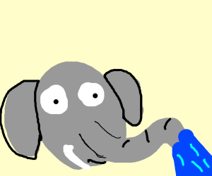 elephant squirts water