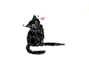 Jet black cat sits and waits