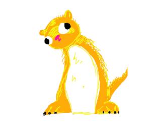 orange ferret with white belly