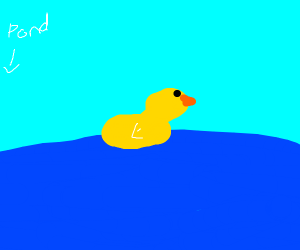 yellow ducky in pond