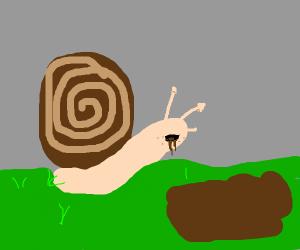 snail eating mud