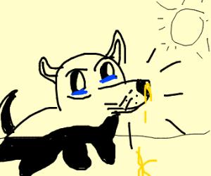 Sneezing diseased pug