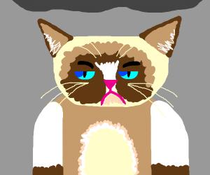 Grumpy cat :((((