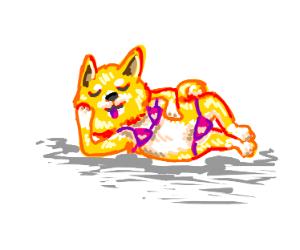 Dog in a bikini (SFW)