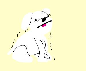White dog shaking