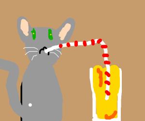 Cat Drinks Apple Juice