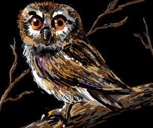 an owl in black backdrop