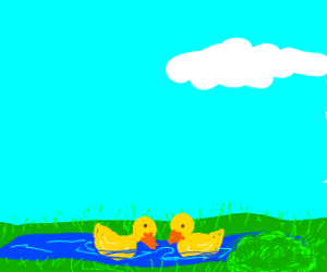 two ducks in a pind