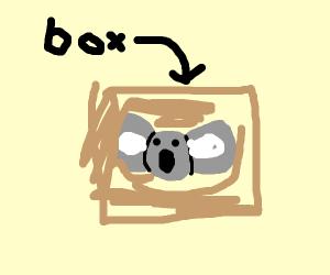 Koala Box Art